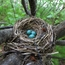 A nest in the brush