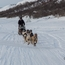 Arctic Dog Musher