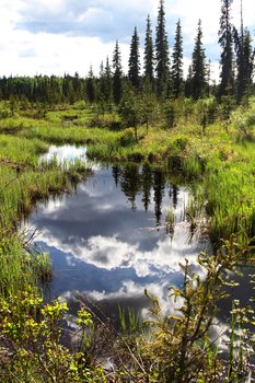 We took long detours, finding a way that skirted around the edges of the countless beaver ponds.