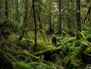 Erin walks through the forest near the Bogachel River in the Olympic Peninsula, WA.