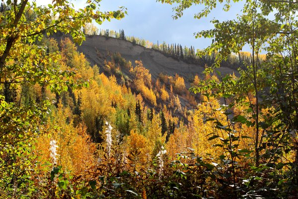 Fall colors decorate the slopes above the Kings River, a tributary of the Matanuska.