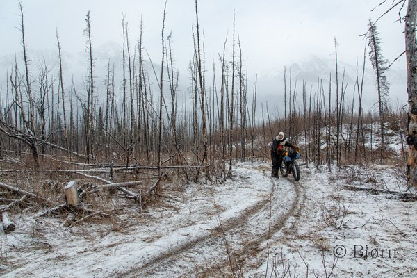 North of the Alaska Range the Iditarod Trail crosses vast forests, some of which has been burnt.