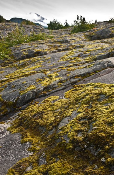Moss thrives on the rocks near Grewinck