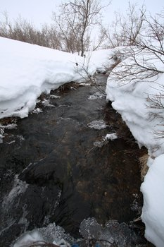 In March, most streams and rivers are frozen, but open water patches (open leads) can form where groundwater enters the stream.