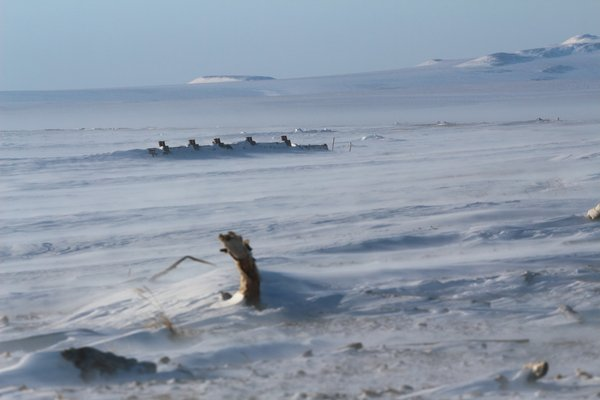 The posts protruding from the snow are part of a shipwrecked barge on the shore of the frozen Bering Sea.