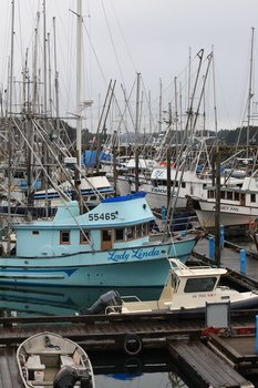 Fishing boats fill one of Sitka's five harbors